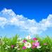 ФотоШторы Полевые цветы