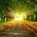 ФотоШторы Дорога в осеннем парке