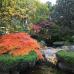 "Фотоштора ""Японский сад"""