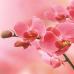 """Фотошторы """"Розовые орхидеи"""""""