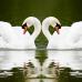 """Фотошторы """"Два лебедя"""""""