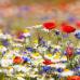 """Фотошторы """"Полевые цветы"""""""