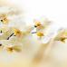 ФотоШторы  Лиловая орхидея