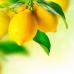ФотоШторы Лимоны