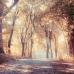 ФотоШторы Прозрачная осень