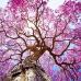 """ФотоШторы """"Дерево в цвету"""""""