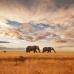 "ФотоШторы ""Слоны в Саванне"""