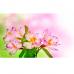 Фотошторы Нежные лилии